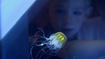Season 01, Episode 06 The Japanese Jellyfish Tank
