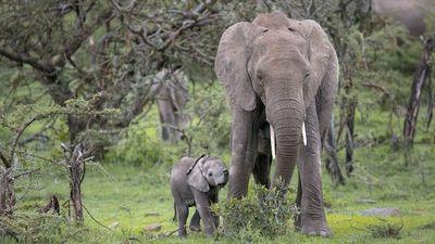Season 01, Episode 37 An Elephant's World: Mission Critical
