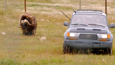 Watch SHOW TITLE Season 01 Episode 01 The Great Musk-Ox Roundup