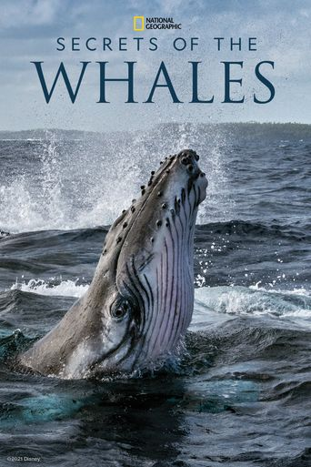 Secrets of the Whales Poster